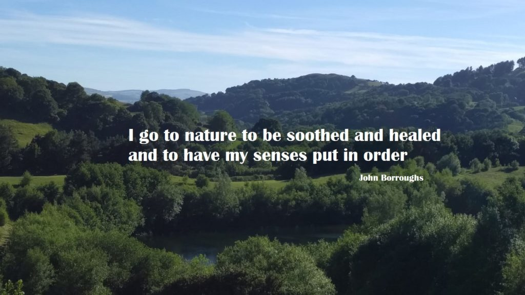 I go to nature to be soothed and healed and to have my senses put in order - John Borroughs